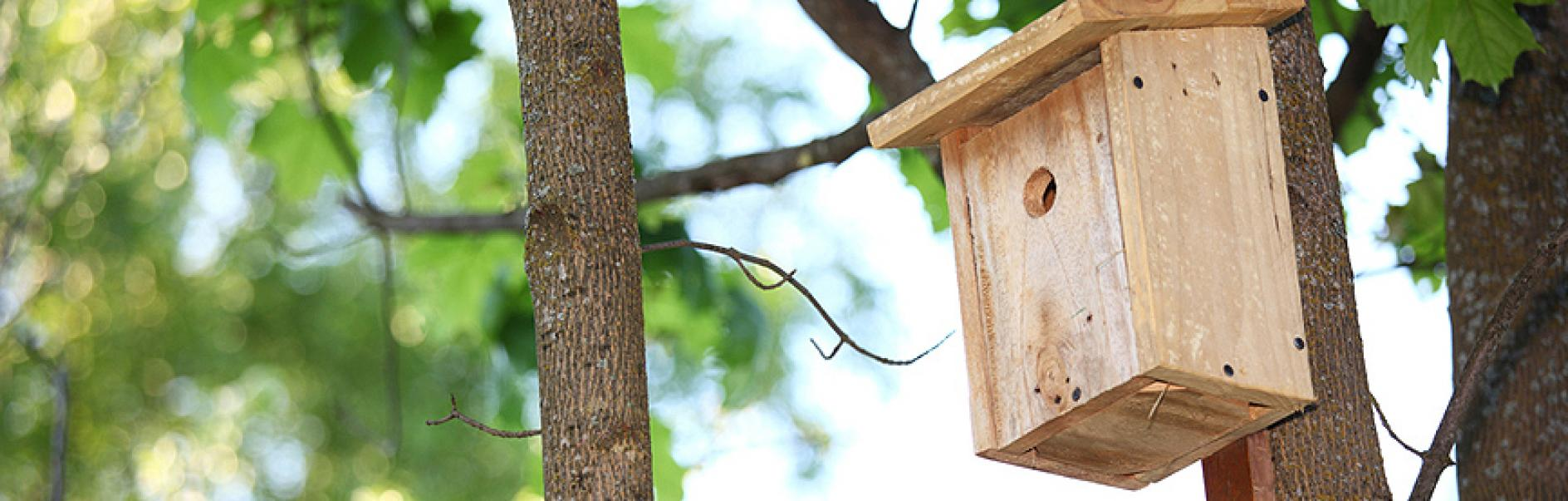 how to make a birdhouse out of wood rh skil co uk make a birdhouse with popsicle sticks make a birdhouse for kids